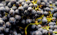 家庭自制葡萄酒的做法 有什么要注意的?