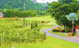 新纬度葡萄酒代表国家,是泰国吗?