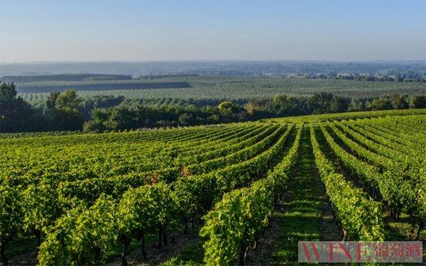 昌黎:葡萄酒成为当地的一道亮丽风景