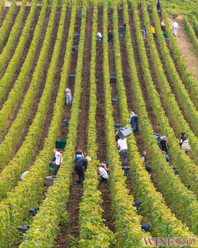 里奥哈:酿造西班牙最优雅的葡萄酒