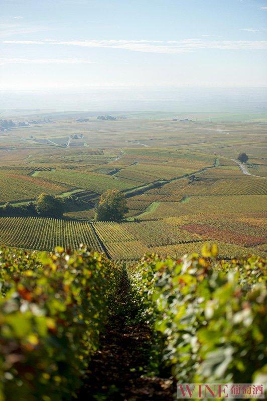 法国罗纳河产区大起底之北罗纳河谷,你了解吗?