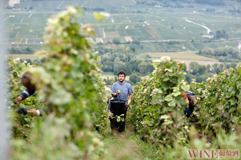 品鉴葡萄酒从待酒开始你知道吗