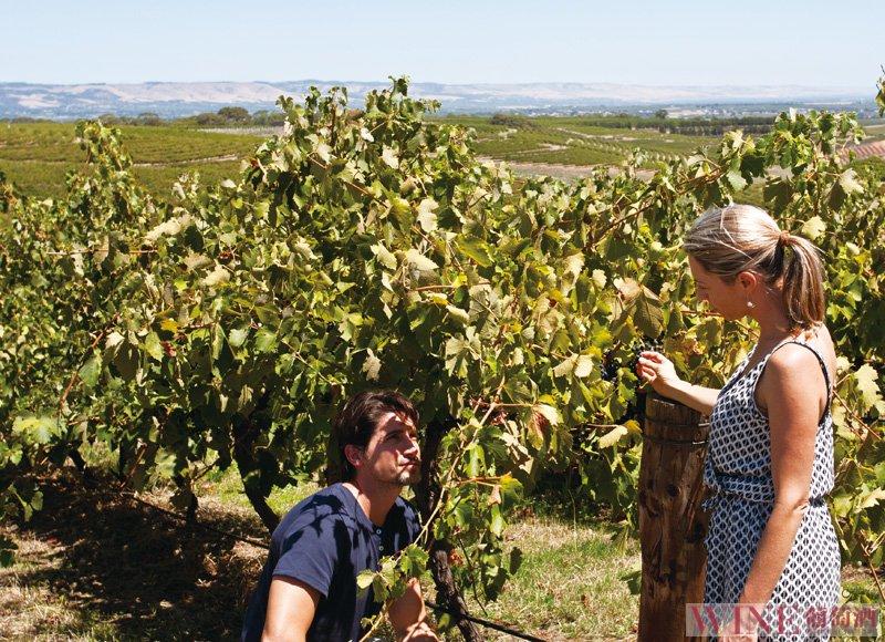举办一场比较型葡萄酒品鉴会应该怎么做