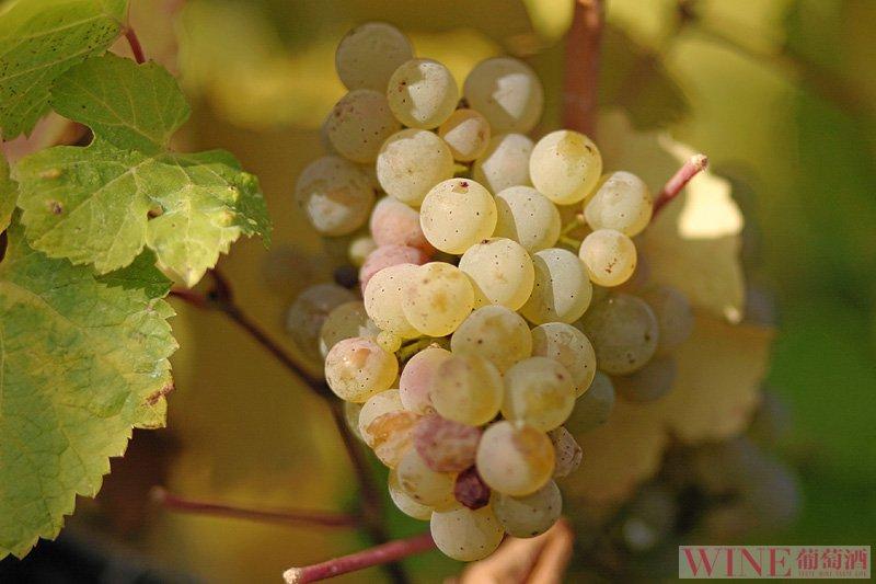 丘吉尔最爱的葡萄酒产区是哪个