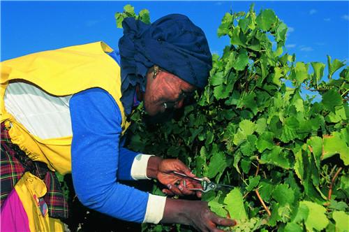 你知道颜色竟然也会影响葡萄酒品鉴?