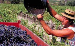 城堡酒与酒厂酒的区分有哪些方法?