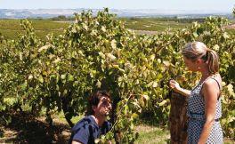 葡萄酒行业的发展方向 有特色才能持久发展