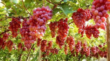 葡萄故鄉丨沙地酒莊:葡萄酒是種出來的!