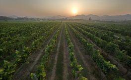 泰国葡萄酒