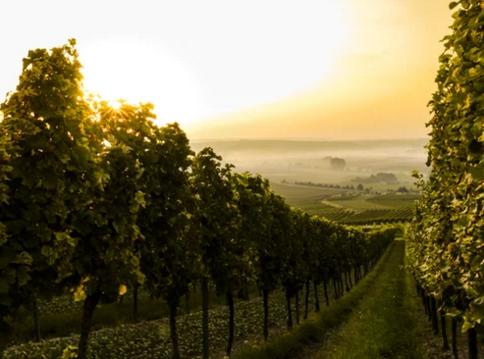 波尔多葡萄酒产区的基本概况