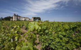 法国滴金酒庄推出2016年份葡萄酒