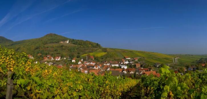 德国葡萄酒之路—葡萄园、葡萄酒品尝会和德国的丰收节