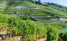 德国葡萄酒产区指南 6大德国葡萄酒产区