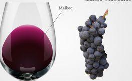 什么是马尔贝克葡萄酒?