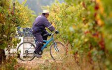 在未来3年内,智利VSPT集团将会采用再生能源酿造葡萄酒
