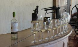 关于白葡萄酒过敏你应该知道的6件事