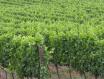 土壤与葡萄酒的关系介绍