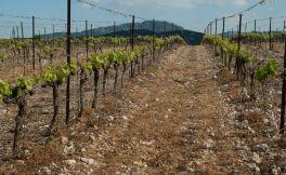 法国葡萄酒大萧条如何改变全球葡萄酒产业