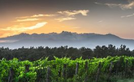 意大利葡萄酒:托斯卡纳产区的历史和文化