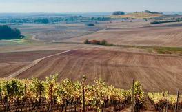 为什么劣质土壤可以酿造出优质的葡萄酒?