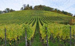 美国密苏里州葡萄酒的历史