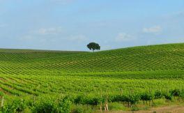 """葡萄酒产区独特性:  密苏里州的""""terroir"""""""