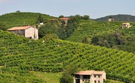 意大利葡萄酒产区:皮埃蒙特的葡萄酒