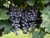 Domaine des Hauts de Sanziers Saumur之红酒