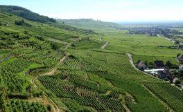 法国葡萄酒全面知识指南