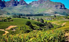 简短的南非葡萄酒产区指南