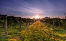 英国BOLNEY葡萄酒庄开设新的酿酒厂