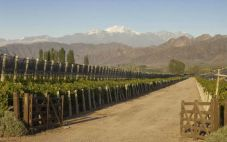 阿根廷安第斯白马酒庄加入波尔多葡萄酒交易所
