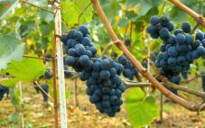 格林罗旺葡萄酒产区