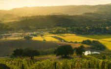 美国杰克逊家族酒业计划在加州希尔兹堡兴建新酿酒厂