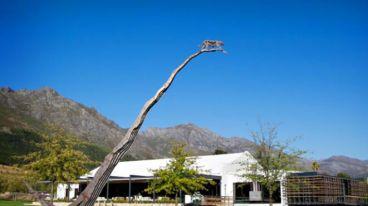 南非年轻时尚的猎豹酒庄,忠于酿造适合年轻人风格的时尚活力葡萄酒