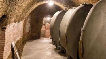 法国维克多酒庄 | 迷信橡木桶是对葡萄酒的不尊重