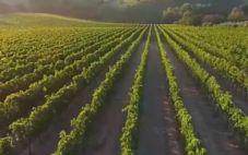 阿布鲁佐葡萄酒占据意大利葡萄酒出口量前三位