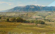 意大利阿布鲁佐大区葡萄酒市场报告出炉