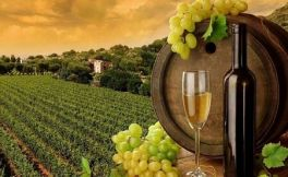真男人就选白葡萄酒是怎么样的呢?