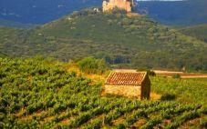 法国多玛士嘉萨酒庄2019年葡萄采收大幅度减少