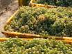 中国酿酒行业2019年全年总产量达5590.13万千升