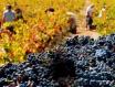 冠状病毒会对澳洲葡萄酒出口产生影响