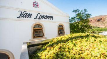 南非最大家族酒莊——梵勞倫家族酒莊