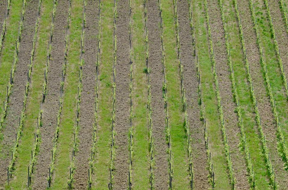 日本葡萄酒产区