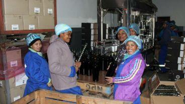 南非历堡酒庄(Laborie Wine)-南非最古老的酒庄之一|厘米贸易诚邀代理