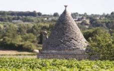 意大利南部葡萄酒行业有着明显增长势头