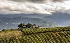阿布鲁佐葡萄酒产区决定减产15%
