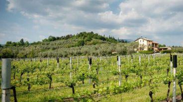 意大利Tinazzi家族酒庄 | TENUTA VALLESELLE庄园