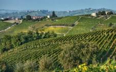 阿菲耶里之地法定产区成为意大利第76个DOCG葡萄酒产区