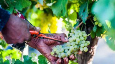不懂南非葡萄酒的人,怎能說懂紅酒 | 厘米貿易招商代理